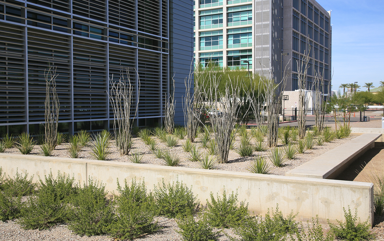 Phoenix Bioscience 09