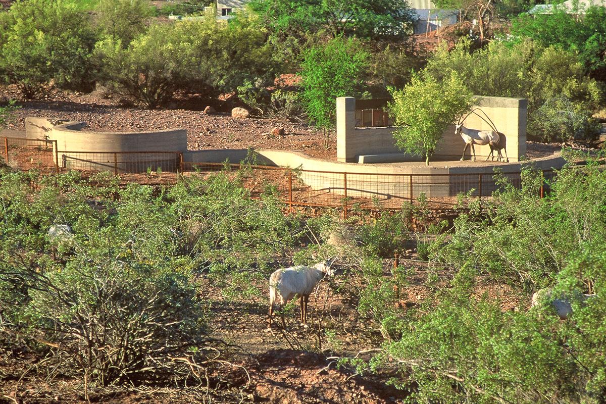 Phoenix Zoo 11