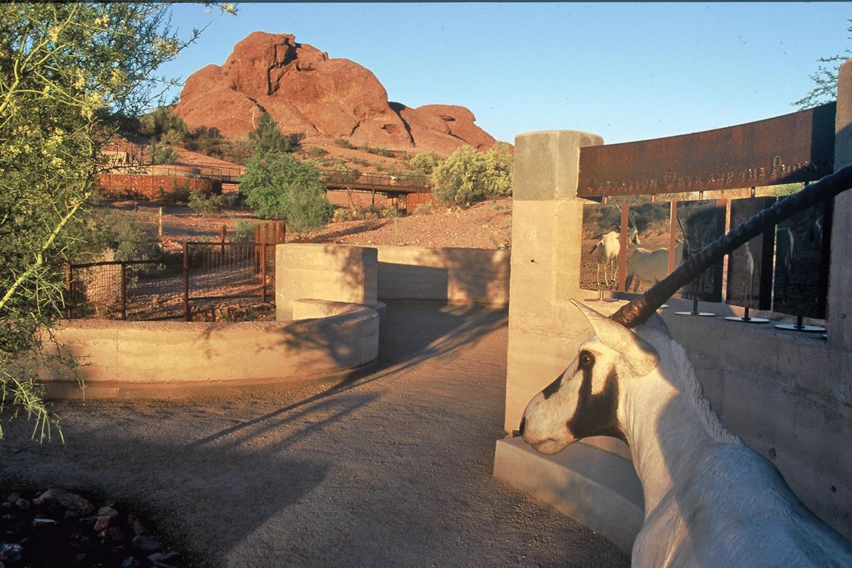 Phoenix Zoo 12